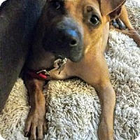 Adopt A Pet :: Tini - Marietta, GA