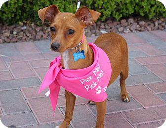 Dachshund/Chihuahua Mix Dog for adoption in Las Vegas, Nevada - EDEN