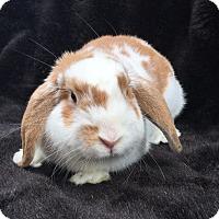 Adopt A Pet :: Ares - Watauga, TX