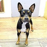 Adopt A Pet :: 17-d06-019 Toni - Fayetteville, TN