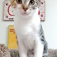 Adopt A Pet :: Cora (CP) - Studio City, CA