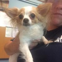 Adopt A Pet :: Picaduras - Tulsa, OK