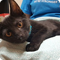 Adopt A Pet :: Cyborg - Reston, VA