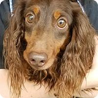 Adopt A Pet :: Kyle Eastwood - Decatur, GA