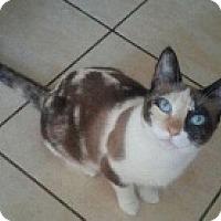 Adopt A Pet :: Diamond - Fort Lauderdale, FL