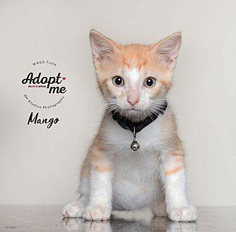 Adopt A Pet :: Mango  - Houston, TX
