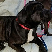 Adopt A Pet :: Lil Will - Tucson, AZ