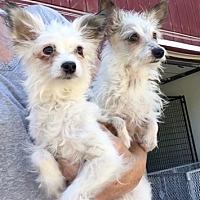 Adopt A Pet :: Starlite and Lulu - Temecula, CA