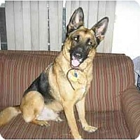 Adopt A Pet :: Sir Hunter of the Highlands - Green Cove Springs, FL