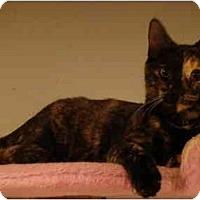 Adopt A Pet :: Rita - Muncie, IN