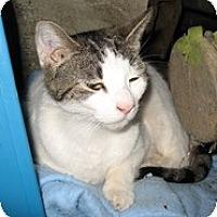 Adopt A Pet :: Abe - Shelton, WA