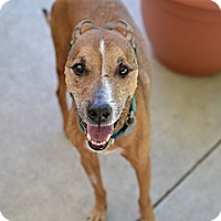 Adopt A Pet :: Thelma - Los Angeles, CA
