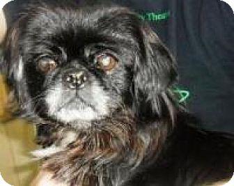 Pekingese Mix Dog for adoption in Irmo, South Carolina - Ellie