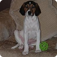Adopt A Pet :: Marcus - Marlton, NJ