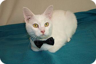 Domestic Shorthair Cat for adoption in Jackson, Mississippi - Casper