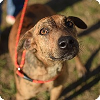 Adopt A Pet :: Rudy - East Hartford, CT