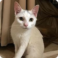 Adopt A Pet :: Cashmere - Yorba Linda, CA