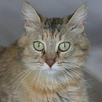 Adopt A Pet :: Cinderella - North Fort Myers, FL