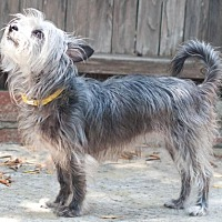 Terrier (Unknown Type, Medium) Mix Dog for adoption in San Diego, California - Irie
