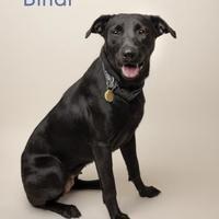 Adopt A Pet :: Bindie - Fairhope, AL