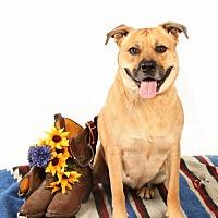 Adopt A Pet :: Zelva, loving life!!! - Sacramento, CA