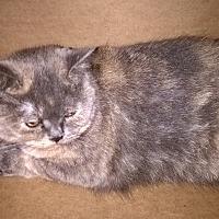 Adopt A Pet :: Sojie - Island Park, NY