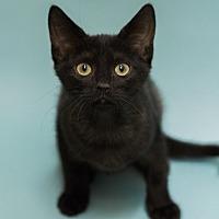 Adopt A Pet :: SUMMER - ENJOY SUMMER ALL YEAR - Plano, TX