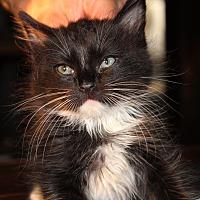Adopt A Pet :: Harold - Sherman Oaks, CA