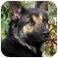 Photo 4 - German Shepherd Dog Mix Dog for adoption in Los Angeles, California - Carrington von Malibu
