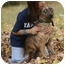 Photo 2 - Catahoula Leopard Dog/Australian Shepherd Mix Dog for adoption in Spring Valley, New York - Tiger