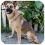 Photo 2 - German Shepherd Dog Mix Dog for adoption in Los Angeles, California - Minka von Munster