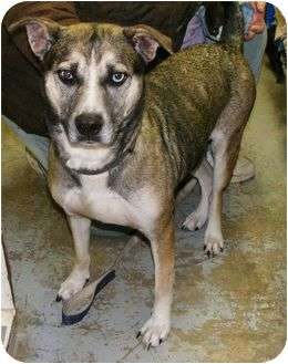 Husky Mix Dog for adoption in Beacon, New York - Crystal