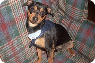 Miniature Pinscher Mix Dog for adoption in Foster, Rhode Island - Sir