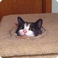 Adopt A Pet :: Crumbles - Port Republic, MD