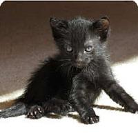 Adopt A Pet :: Pernod - La Jolla, CA