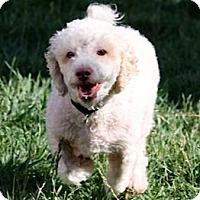 Adopt A Pet :: MURPHY - Salt Lake City, UT