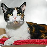 Adopt A Pet :: Callie - New York, NY
