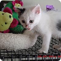 Adopt A Pet :: Bergie - Acme, PA