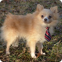 Adopt A Pet :: Jaynie - Mocksville, NC