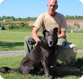 German Shepherd Dog Mix Dog for adoption in Elyria, Ohio - Oswald-Prison Dog