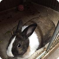 Adopt A Pet :: Princess - Williston, FL