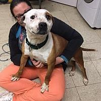 Adopt A Pet :: Myrtle- Ohio - Fulton, MO