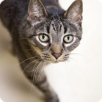 Adopt A Pet :: Jeeves - St. Paul, MN