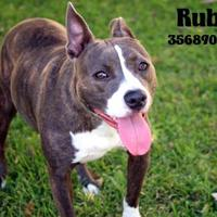 Adopt A Pet :: Ruby - Gulfport, MS