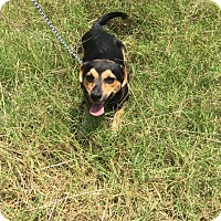 Adopt A Pet :: Carissa - Columbia, TN