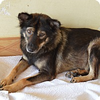Adopt A Pet :: Daisy Duke - Vancouver, BC
