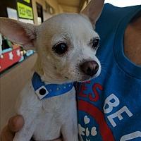 Adopt A Pet :: Tyke - Las Vegas, NV