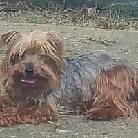 Adopt A Pet :: WINSTON MAXWELL - Fishkill, NY