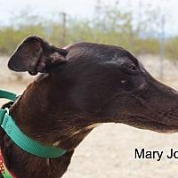 Adopt A Pet :: Mary Jo - Tucson, AZ
