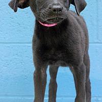 Adopt A Pet :: Tila - Waldorf, MD